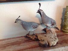 Pair Of Gamble'S Quail Male/Female Birds Taxidermy Mounts Stuffed Animal