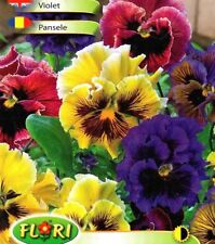 VIOLA PANSY ROCOCO - FRILLED - MIXED - 130 HIGH QUALITY FLOWER SEEDS /1249