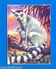 ANIMALI - Lampo 1964 - Figurina-Sticker n. 34 - MAKI -New