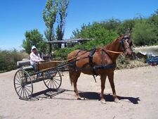 Horse Buggy & Harness (2 person), Excellent Condition