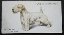 Sealyham Terrier     Original Early 1930's Vintage Illustrated Card