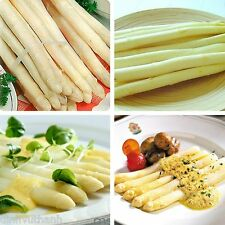 White Asparagus Seeds Vegetable Organic - 30 Seeds