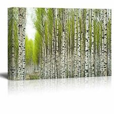 Canvas Prints Wall Art - Birch Trees with Fresh Green Leaves in Spring - 24x36