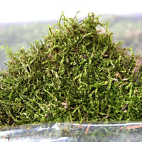 500g NATURAL DRIED GREEN NORWEGIAN BUN MOSS CRAFT DECORATION CHRISTMAS WALL ART