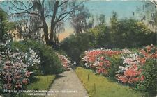 Charleston South Carolina~Pathway in Magnolia on the Ashley River~1914 Postcard