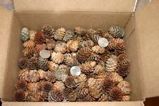 "Lot of 200 Real Spruce Pine Cones Maine 1""-1.75"" Wreaths Holiday Christmas Fall"