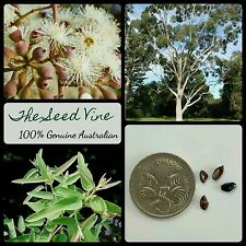 30+ LEMON-SCENTED GUM TREE SEEDS (Eucalyptus citriodora) Native Drought Hardy