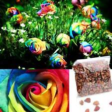 NEW ! 500 Pcs Rare Rainbow Rose Flower Seeds Multi-color Plant Home Garden AAAUK