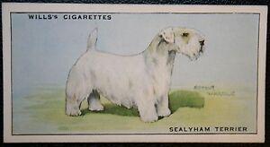 SEALYHAM TERRIER   Original Vintage  Coloured Card  VGC