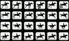 Eadweard Muybridge Photo, Jumping Horse, 1880s, 11x17""