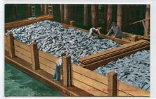 Salmon Fish Catch Scow Load Bellingham Washington 1910c postcard