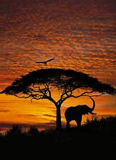 AFRICAN SUNSET Photo Wallpaper Wall Mural ELEPHANT BIG TREE NATURE  194x270cm