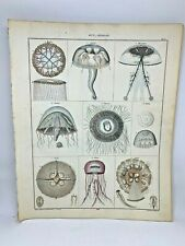 Antique large hand colored print 1843.Oken's Naturgeschichte Plate 5 Jellyfish