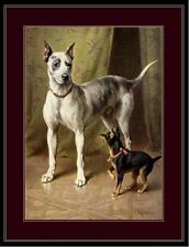 English Print Great Dane Miniature Pinscher Dog Picture