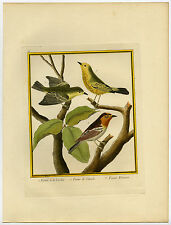 Antique Print-FIGBIRD-CAROLINA-CANADA-FIGUIER-Martinet-Buffon-1770