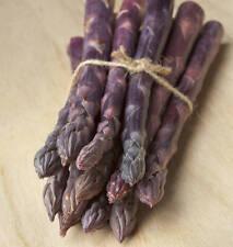 Asparagus Sweet Purple (30Seeds) - Organic Heirloom from Life-Force Seeds