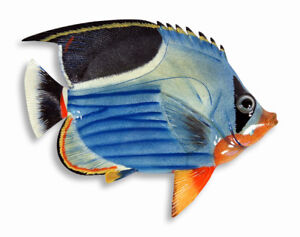 """Hand Painted 15"""" Tropical Fish Wall Mount Decor Sculpture Blue Wave 76A-X"""