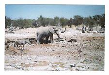Vintage Photo Elephant Zebra African Safari 1990's May17