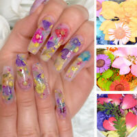 Dried Flowers 3D Nail Art Decorations Mixed Natural Floral Decals for UV Gel DIY