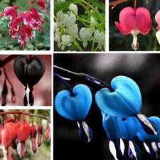 20Pcs Bleeding Heart Flower Seeds Dicentra Jeanette's Heart Rare 12 Kinds Plants