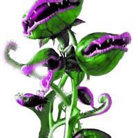 50 stk grün großen Mund Insektenfresser Blumensamen Samen Obst Gemüse-Blume Q2T2