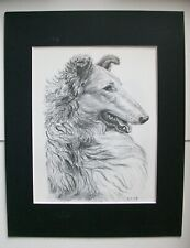 Collie Head Study Dog Print Gladys Emerson Cook Bookplate 1962 11x14 Matted