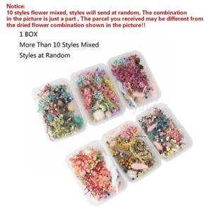 1 Box DIY Dried Flower for Aromatherapy Epoxy Resin Necklace Jewelry Make Craft