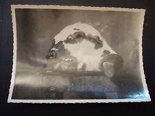 Photographie anonyme vintage snapshot TETE DE VEAU BICEPHALE SUR UN BILLOT