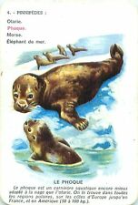 COMMON Harbor  SEAL Phoque Seehund  PLAYING CARD CARTE A JOUER OLD ANCIEN