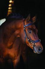 Horseware Rambo Micklem Multibridle ohne Zügel Gr. Pony - Large Horse