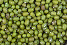 Moong  Green Beans 1.0 kilos Big  LARGE Size for  Very Good for Bean Sprouting