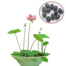 bowl lotus seed hydroponic plants aquatic plants flower seeds pot water lily, 10