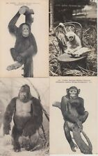 MONKEYS SINGES ANIMALS ANIMAUX WITH BETTER 79 CPA (mostly pre-1940)