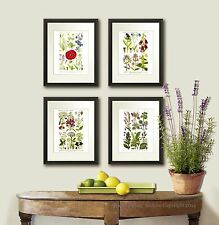 Wild Flowers Botanical Illustrations set of 4 Wall Art Prints Country Wall Decor