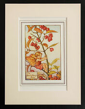 Spindle Berry Flower Fairy - Mounted Original 1930 Cicely Mary Barker Print