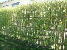 20 feet long, 5 feet high hedge kit, Quick Growing Screen