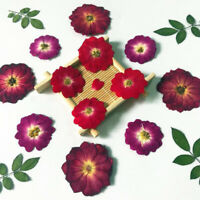 12Pcs/Lot Real Dried Rose Flower DIY Home Ornament UV Resin Mold Jewelry Maki YK
