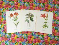 Vintage Wild Flower Prints Set of 3 1950s Book Plate Plants Prints to Frame...