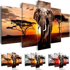 AFRIKA ELEFANT NATUR TIERE Wandbilder xxl Bilder Vlies Leinwand g-C-0054-b-n