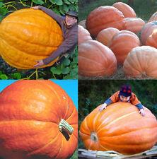 10PCS New Giant Nutritious Pumpkin Vegetables Seeds Home Garden Plant HX92