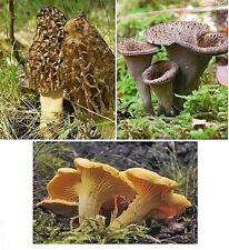 Pilze Bio Probierset 50g Morcheln 50g Herbsttrompeten 50g Pfifferlinge