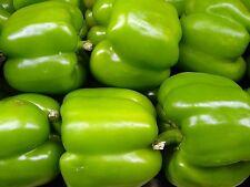 200 BIG GREEN BELL PEPPER Sweet Capsicum Annuum Vegetable Seeds *Combined Ship