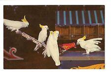 Billy the Cockatoo Train Birds Anheuser Busch Gardens Tampa Florida Postcard Fl