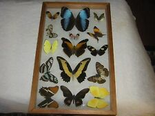 Vintage Real Butterfly Collection In Glass & Wood Framed Display Case