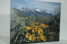 ORIGINAL PICTURE ON CANVAS 16 IN. BY 20 IN.  THE GRAND TETONS