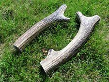 2 antler dog chews, large, 23-24cm long, 380 grams weight