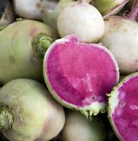 Watermelon Radish Seed - Garden Radishes Root Vegetable Seeds (2.0gr to 50gr)