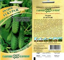 world best tasty F1 Pickling  cucumber 10x seeds from Russia mini sweet gherkin