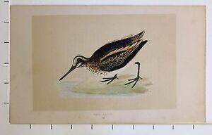 c1875 ANTIQUE PRINT ~ JACK SNIPE HAND COLOURED British Birds Morris