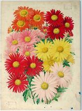 SEED CATALOGUE ART, années 1920. Original Aquarelle, coréen Chrysanthème, DIEU SOLEIL...